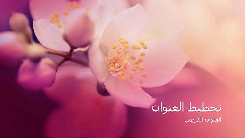 العرض التقديمي لطبيعة أزهار الكرز (شاشة عريضة)