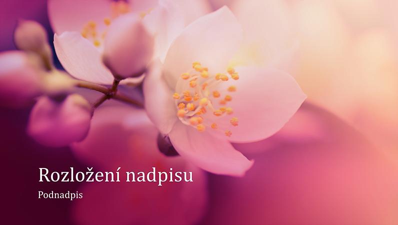 Prezentace s přírodním motivem třešňového květu (širokoúhlý formát)