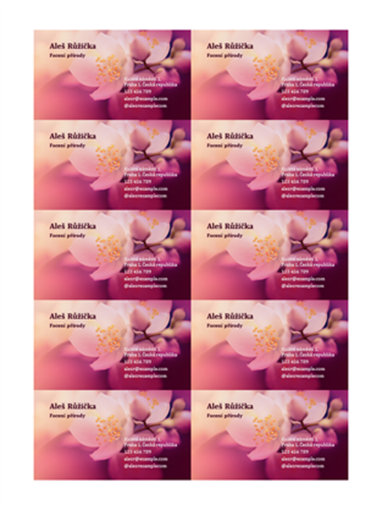 Vizitky (fotografie květiny)