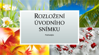 Prezentace s motivy přírody ve čtyřech ročních obdobích (širokoúhlý formát)