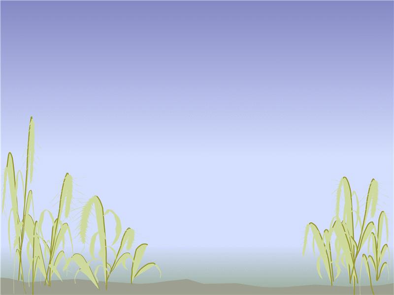 Designskabelon med strandmotiv