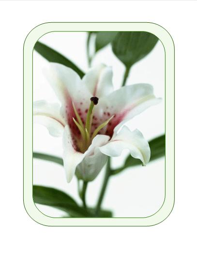 Påskekort (med påskelilje)