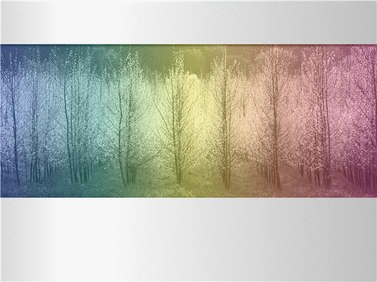 Billede af træ med flerfarvet nuance