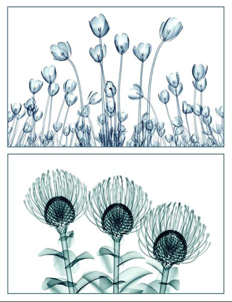 Grußkarten mit Blumenmotiven (10 Karten, 1 pro Seite)