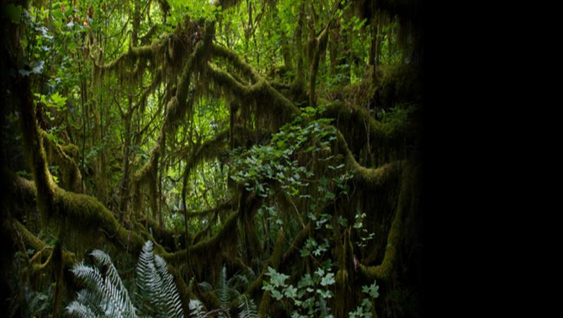 Animierter Lauftext vor dem Hintergrund eines Regenwaldfotos