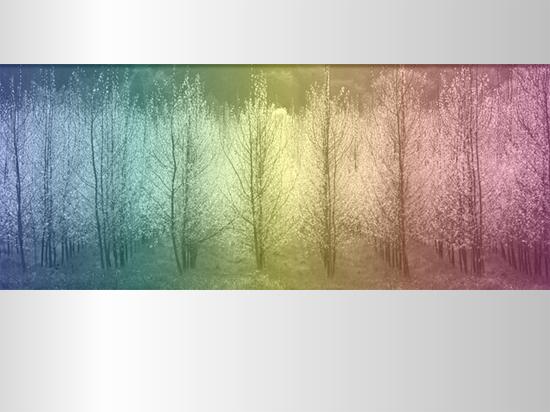 Abbildung von Bäumen mit mehreren Farbtönen