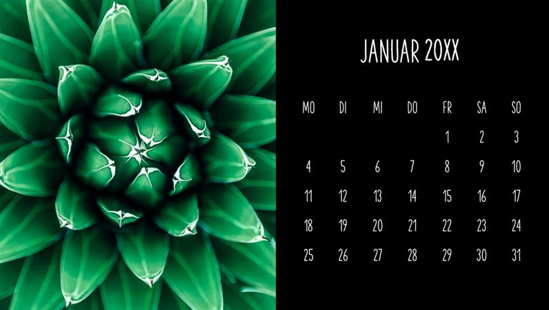 Monatskalender zum Thema Sukkulenten
