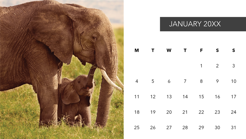 Cute animals photo calendar