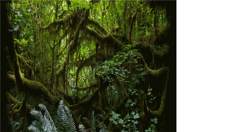 animated scrolling text over rainforest background slide