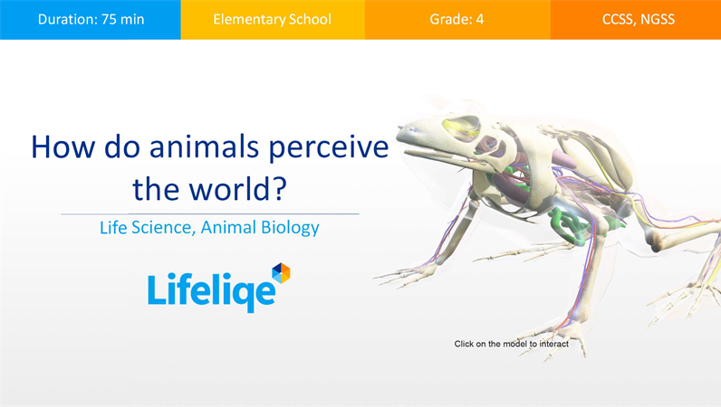 How do animals perceive the world?