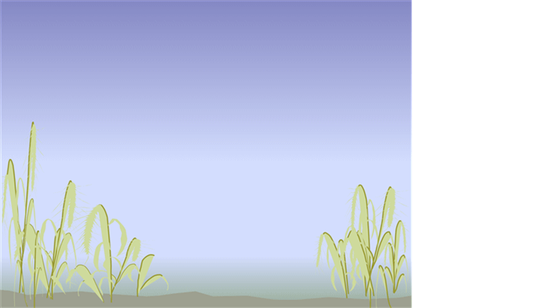 Plantilla de diseño de orilla