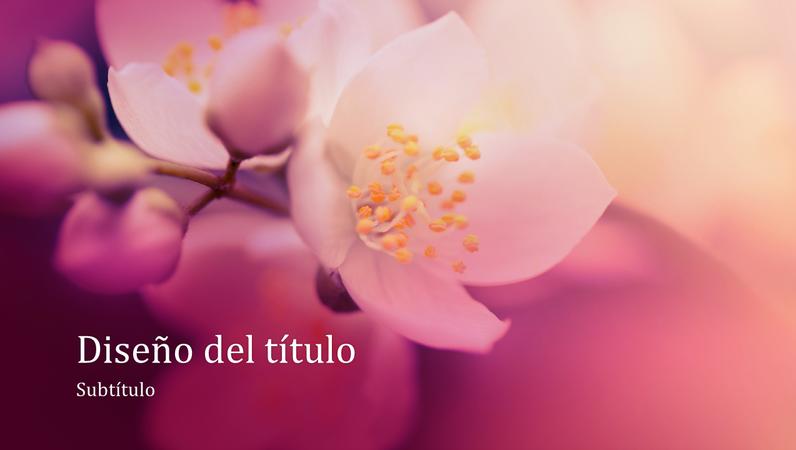 Presentación de naturaleza con flor de cerezo (panorámica)