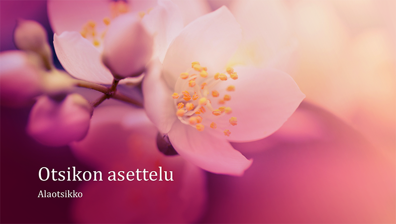 Kirsikankukkateemainen luontoaiheinen esitys (laajakuva)