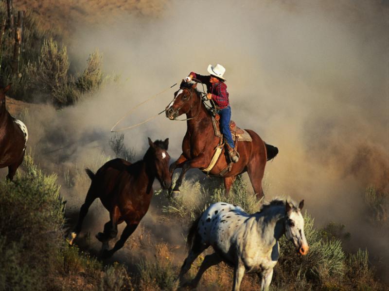 Thème désert - Cowboy en action