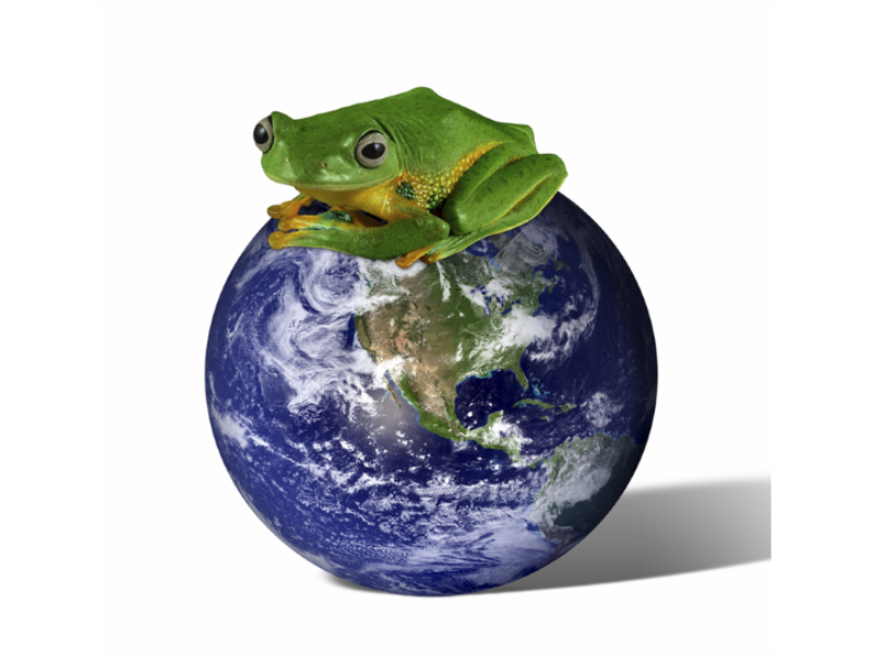 Thème écologie - Grenouille