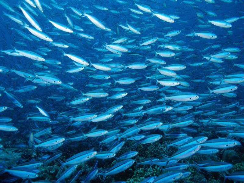 Thème mer - Banc de poissons