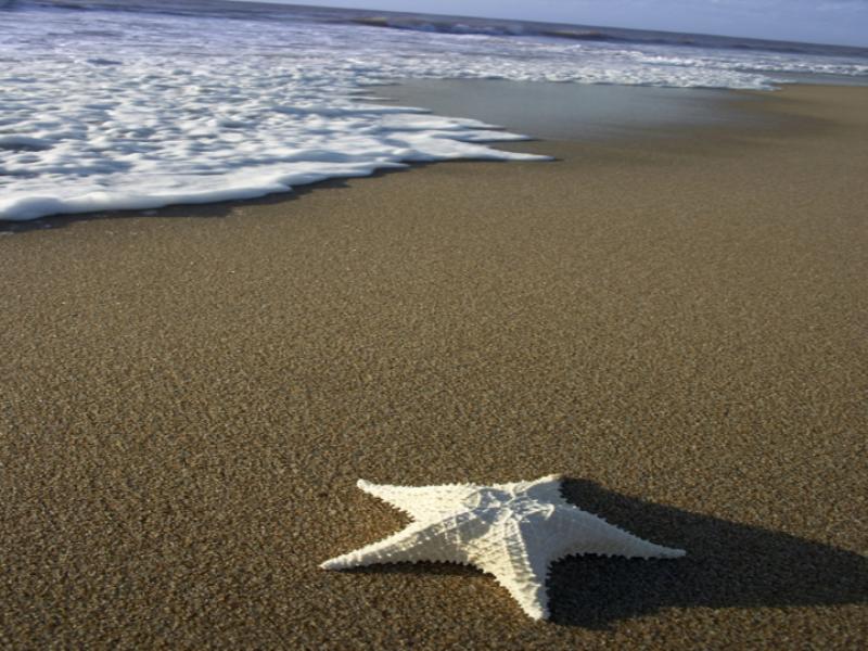 Thème mer - Etoile de mer