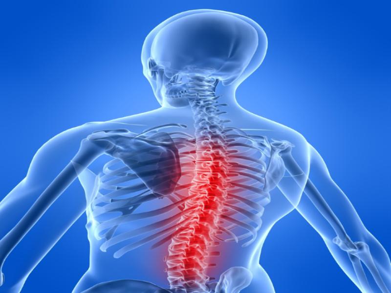 Thème santé - Anatomie colonne vertébrale