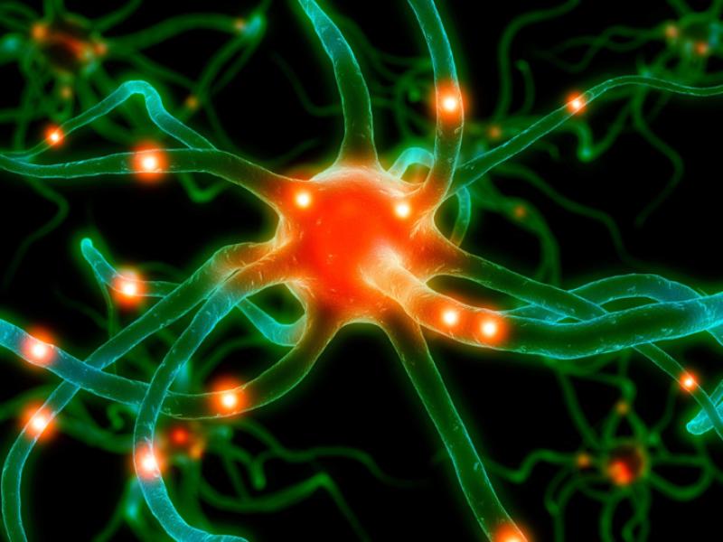 Thème santé - Anatomie neurones complexes