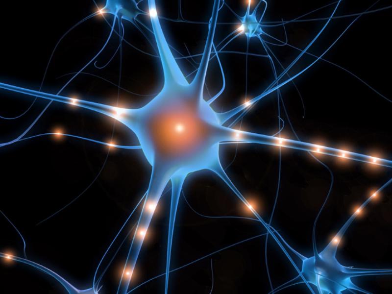 Thème santé - Anatomie neurones