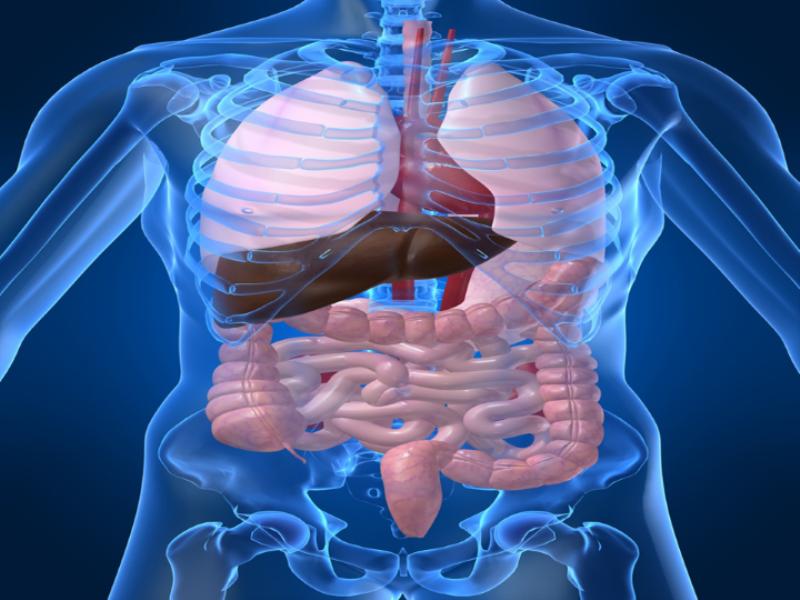 Thème santé - Anatomie abdomen