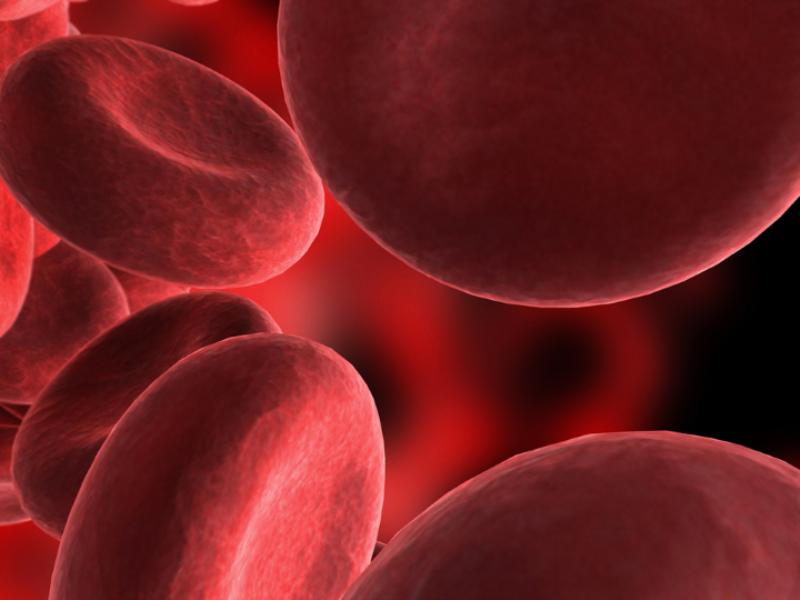 Thème santé - Globule rouge