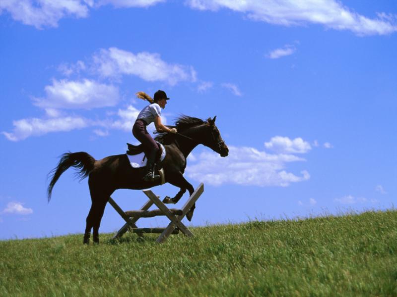 Thème équitation - Entrainement