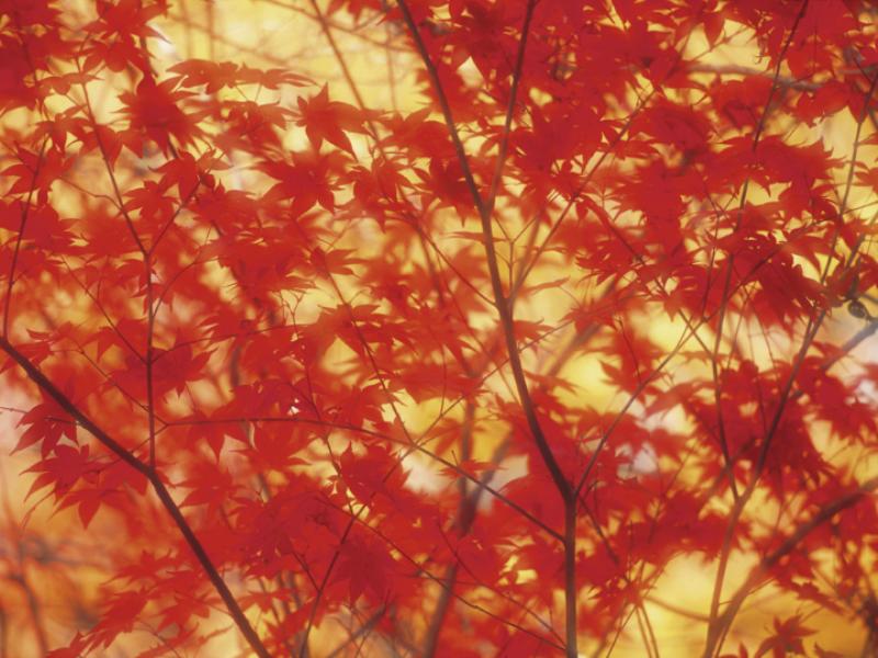 Thème automne - Feuilles rouges et jaunes
