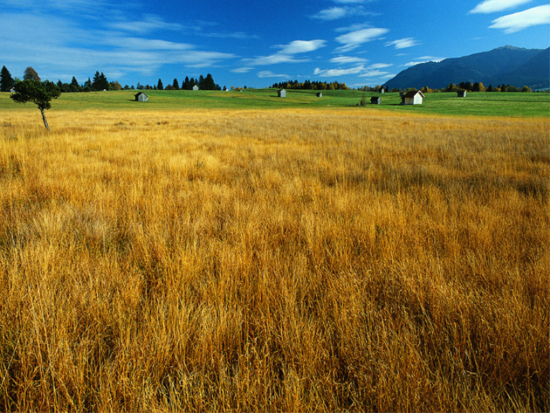 Thème campagne - Prairie