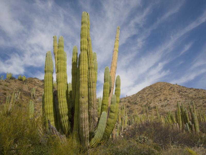Thème désert - Cactus