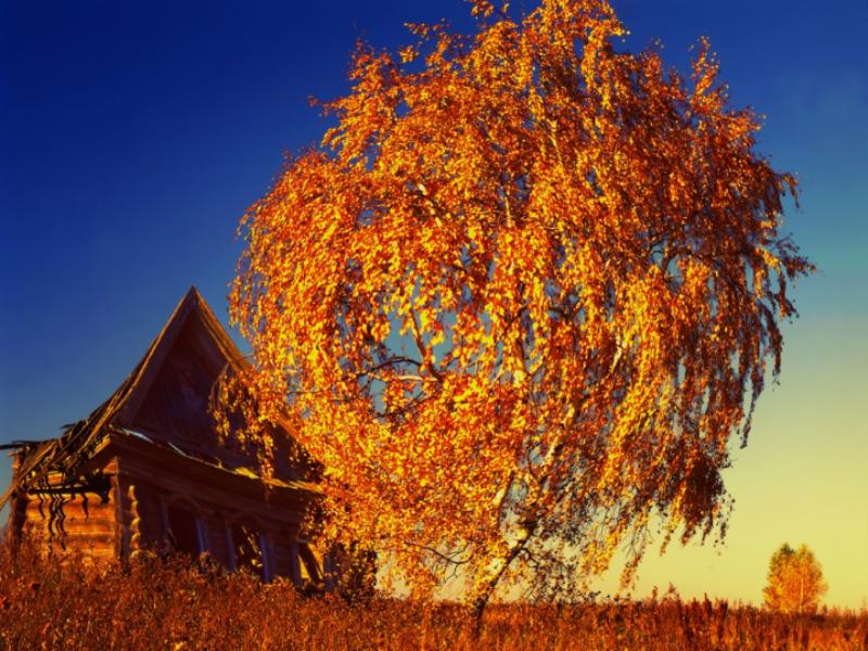 Thème automne - Arbre doré