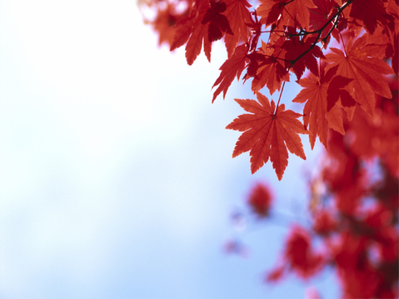 Thème automne - Feuilles rouges