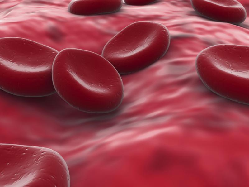 Thème santé - Globule rouge zoom