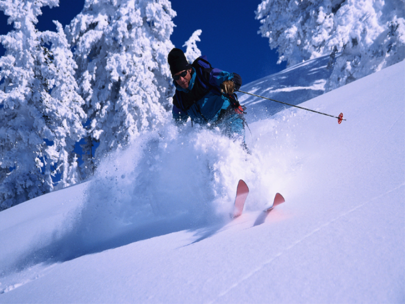 Thème ski - Poudreuse et sapins blancs