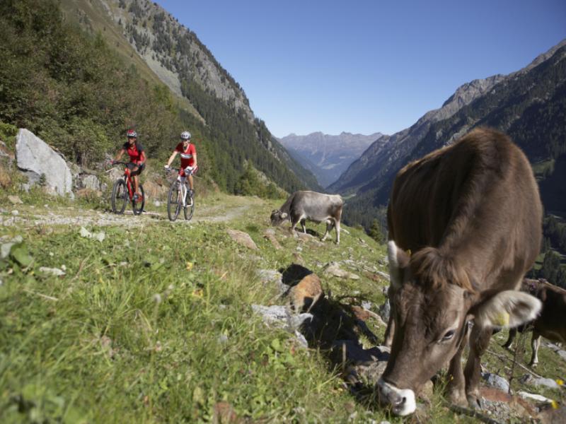 Thème vélo - VTT en montagne