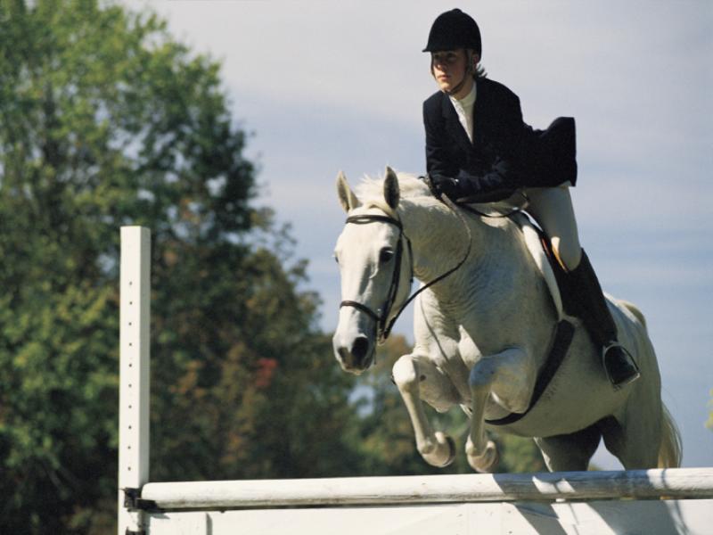 Thème équitation - Saut