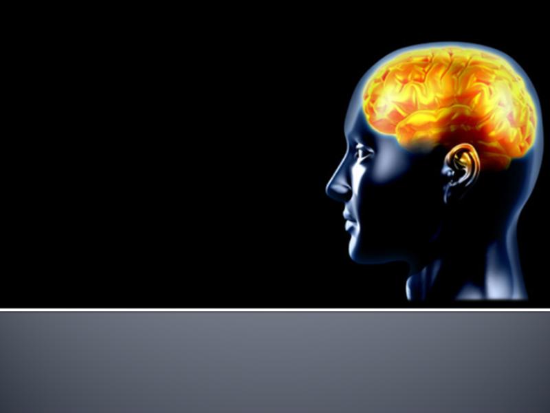 Thème santé - Anatomie cerveau
