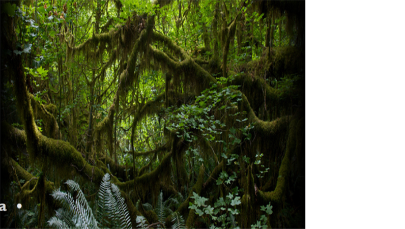 Animirani tekst koji prelazi preko pozadinske slike prašume