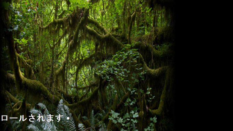 熱帯雨林の背景の上をスクロールするアニメーション化されたテキスト