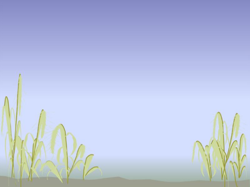 海岸のデザイン テンプレート