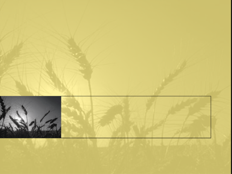 小麦畑のデザイン テンプレート
