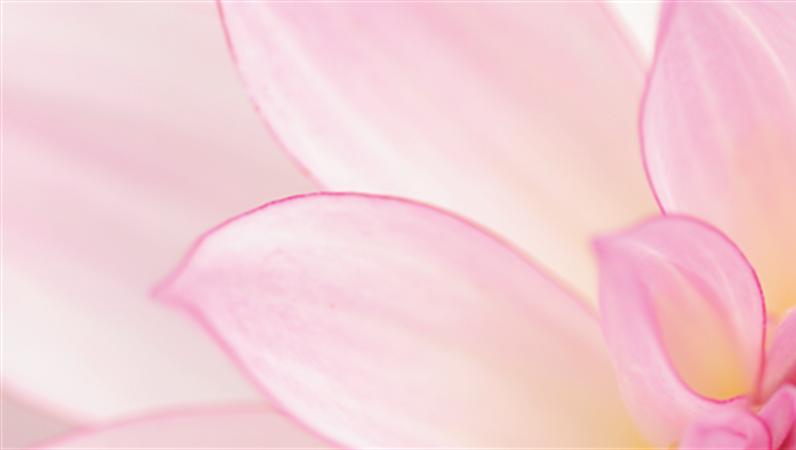 花の LinkedIn バナー