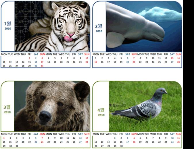 동물 사진 달력