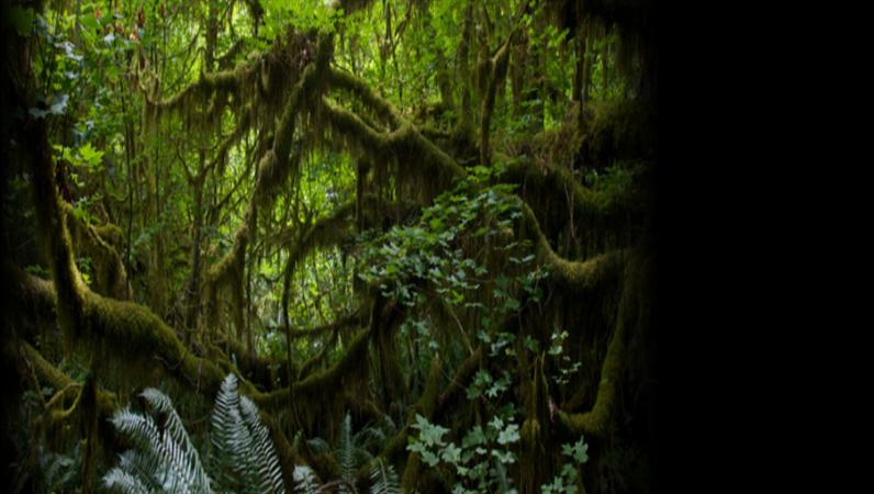 Animuotas slenkantis tekstas atogrąžų miško fone