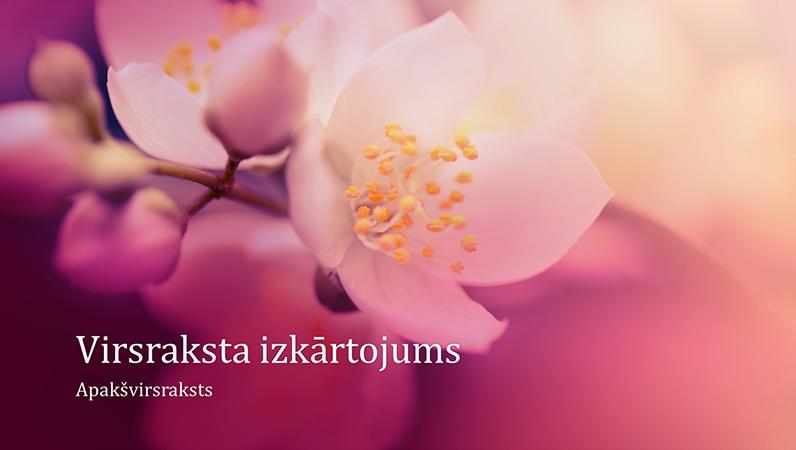 Prezentācija ar ķiršu ziedu noformējumu (platekrāna)
