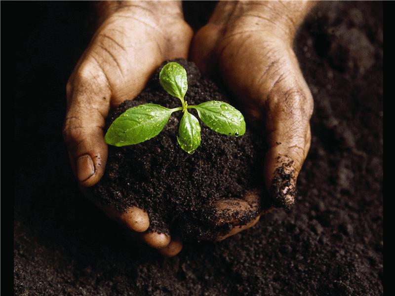 Slajd z obrazem młodej rośliny