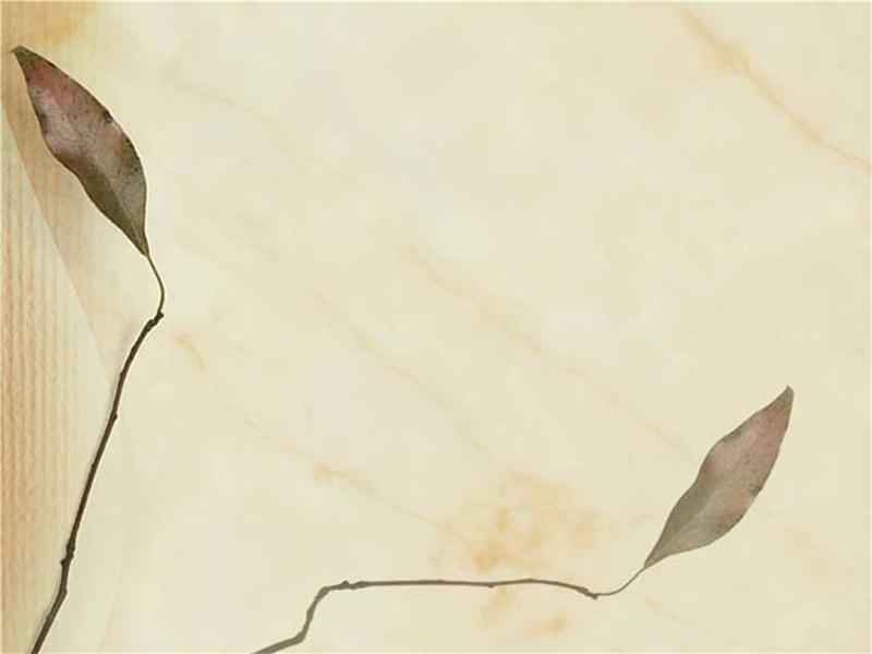 Modelo de design de folhas prensadas