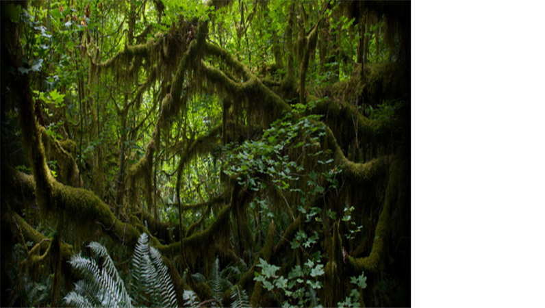 Text animat ce defilează deasupra unui fundal cu pădure tropicală