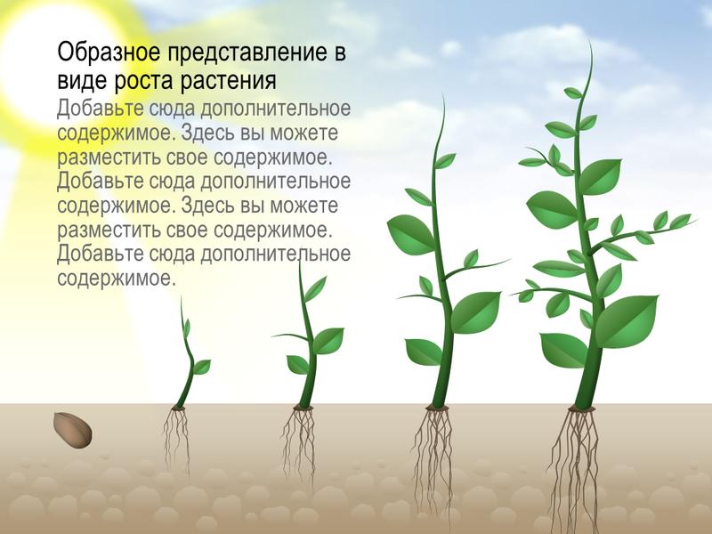 """Рисунок """"Этапы роста растения"""""""