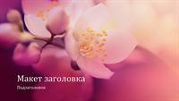 """Презентация с природными мотивами """"Цветущая вишня"""" (широкоэкранный формат)"""